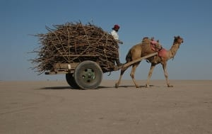 800px-camel_cart_in_rann_of_kutch2